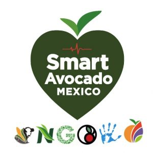 Smart Avocado Mexico
